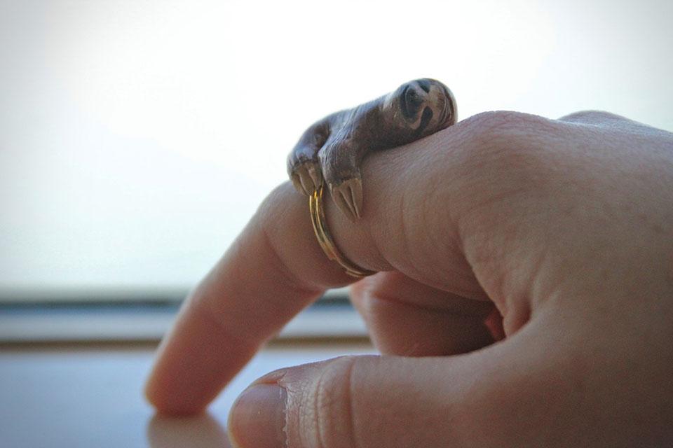 Кольцо с ленивцем