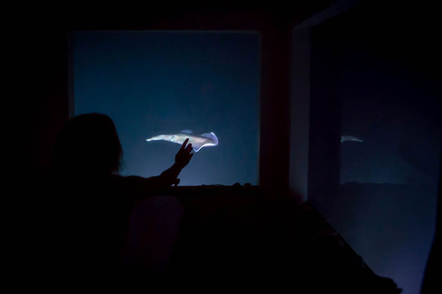 03-Manta-Underwater-Room