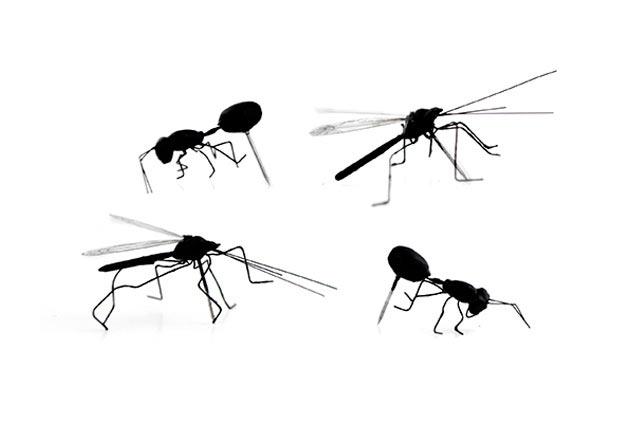 03-Insect-Push-Pins