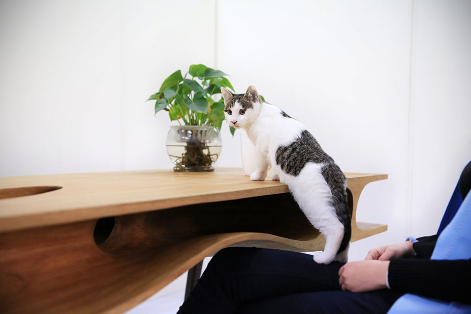 Рабочий стол CATable для любителей котиков