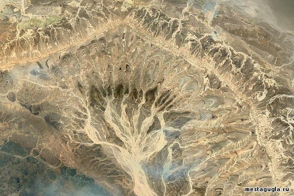 Песчаное дерево в Египте
