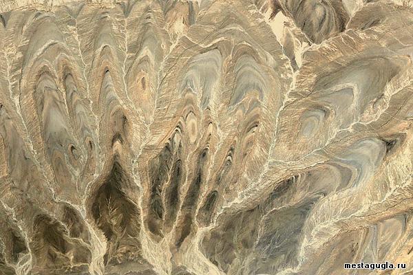 Ветви песчаного дерева