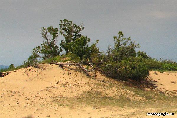 Песчаные люны
