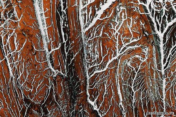 Нервная система на Новой Земле